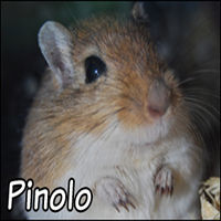 Pinolo the naughty chatbot